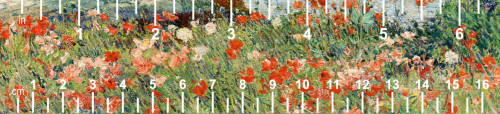 Pink-red-flowers-white ruler