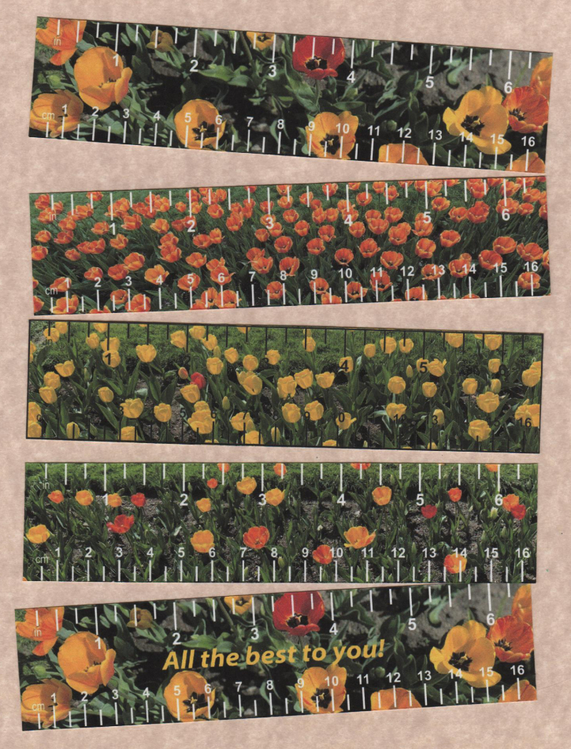 Tulip-collage-5 rulers