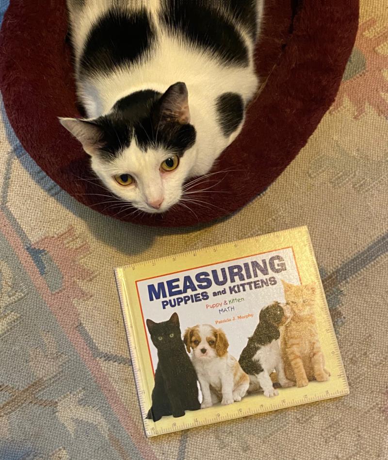 Measuring-kittens-Libby-ed1
